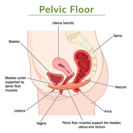 Pop Pelvic Organ Prolapse Maternity Physio