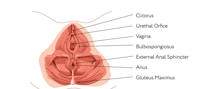 Whats the Pelvic Floor DO? and how do i find it?!